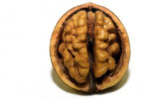 Brain or Walnut?