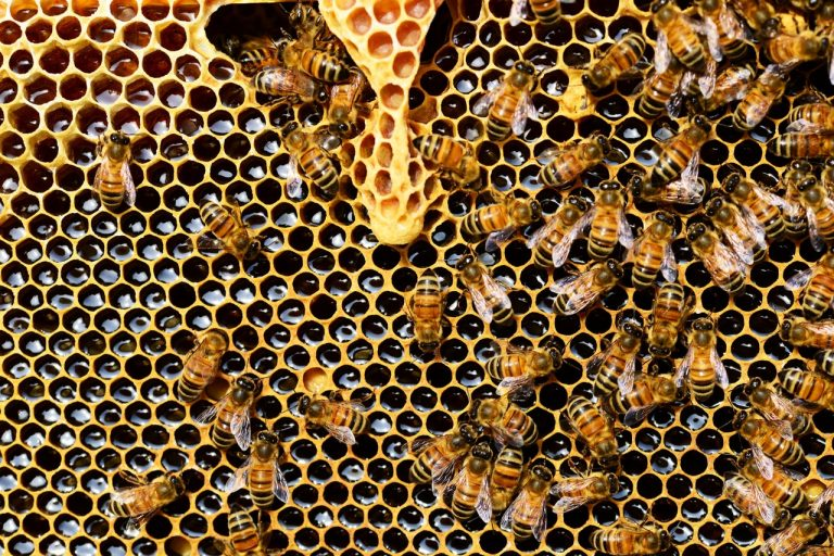 Ever Seen A Sick Bee?  Benefits of Honey for Health