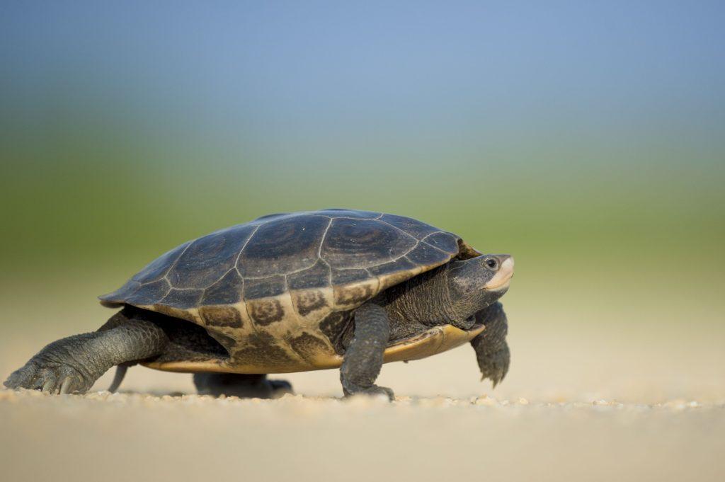 Slow vs Fast Metabolism